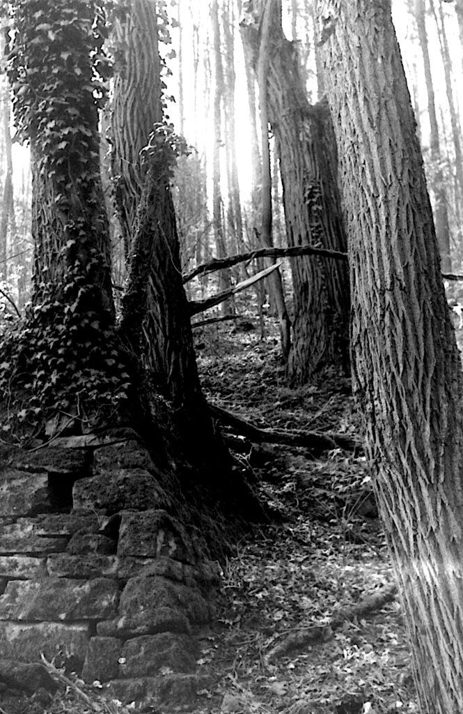 Mauerreste und Bäume im Albtal bei Ettlingen - Fomapan 400 - Zeiss Ikon Continette