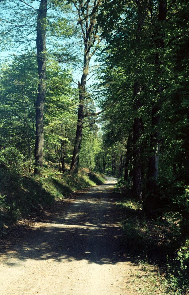 Fast wie gemalt - ein Waldweg im Schwarzwald - Agfa Billy I - Kodak Ektar 100