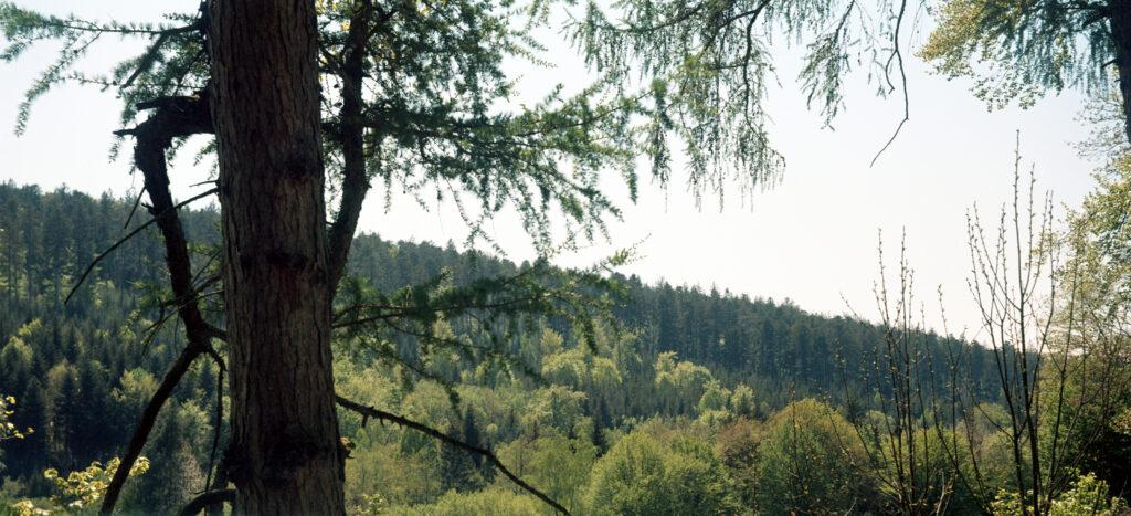 Nur der obere Teil vom Foto - wg. einem Lichtleck habe ich es beschnitten - Schwarzwald - Agfa Billy I - Kodak Ektar 100