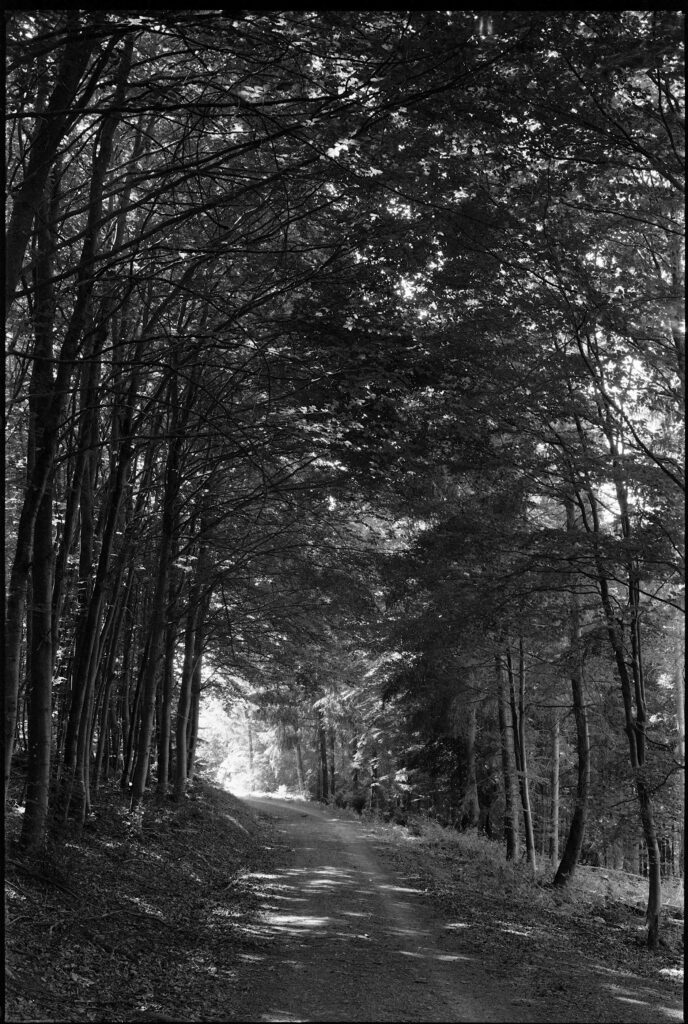 Waldweg im Moosalbtal - Horseman VH-R  - Fomapan 200