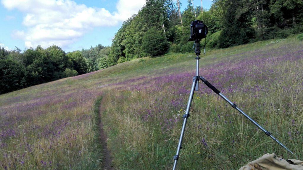 Mit dem Handy aufgenommen - Horseman VH-R - Fujicolor Pro 400H